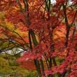 紅葉を求めて京都へ