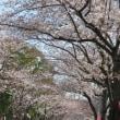 桜も椿も・・・・