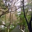2017年12月23日 白山比咩神社 表参道