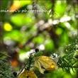 可児川下流域自然公園 榎の実