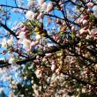 18-04-21 花盛り
