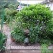 ゼラニウム・リトルステラと新しい花壇