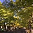 昭和記念公園 26日