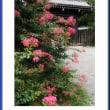 寺町御門の夏花