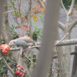 小鳥の餌場