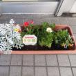 「花いっぱい運動」