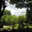 上野・寛永寺の甍