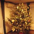 本物のクリスマスツリーを見に