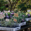 1/24:花日記(芦屋町:ANTS Garden さんの花々)