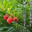 紅豆杉の類まれな生命力を健康にお役立て下さい