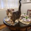 春のテーブルセッティングと猫のココア