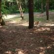 赤松林散歩 180718