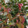 芽ぶきの季節