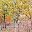 万博公園 (3)