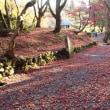 鶏足寺の紅葉