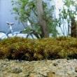 苔貼りと植栽