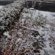 やって来ました!…初雪さん