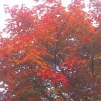 10/16(月)のPACニュース~追分&軽井沢周辺の情報