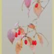 赤い実が目に付く