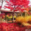 紅葉の「日本庭園」を撮りました !