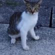 今日の一枚【today's shot】ネコちゃん(cat)