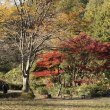 大池こども自然公園・紅葉
