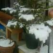 雪が降って!