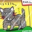 トイプーみたいなネコ