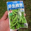 早生枝豆種蒔き