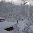 大雪だ・・・