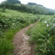 ササユリ満開の白草山!