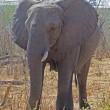 繊細さと豪快さをあわせ持つ象