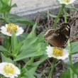 マラソンタオル 初めて見る蝶