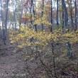 ☆晩秋の茅ヶ岳