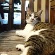 猫にホトトギス