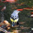 この季節に初めて見た野鳥~~