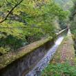 琵琶湖疎水周辺の紅葉