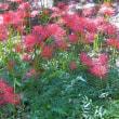 昭和記念公園、夏の名残から秋へ