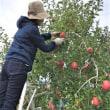 りんごの仕事
