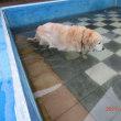いつものプール