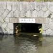 京都・「禊川(みそそぎがわ)」