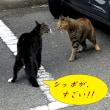 """風太と""""ナゾのご近所猫""""の攻防&とうとう冬の寒さがやってきたぁ~♪"""