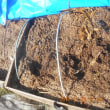 古いもみ殻堆肥をサトイモの防寒に、新しいもみ殻堆肥は野菜くず等を追加