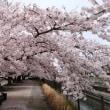 それは春のせい ―コトノハ―