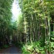 韓国が誇る竹の町にはいたるところに韓流スターの訪問した足跡がある?!