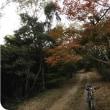 紅葉狩り ②   …オレンジライイン