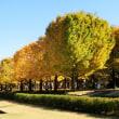 東京都立川市 国営昭和記念公園 散策してきました。