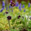 春は花から(2) 180318
