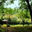 杖の旅:杖の練習から落ち着いた心の変化へと・・