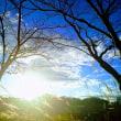 11月21日(火)のつぶやき 関西出張 株式会社AD-CREATE ススキ 夕暮れ 兵庫県